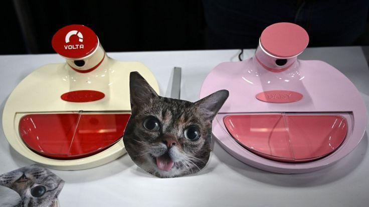 Устройство для кормления кошек