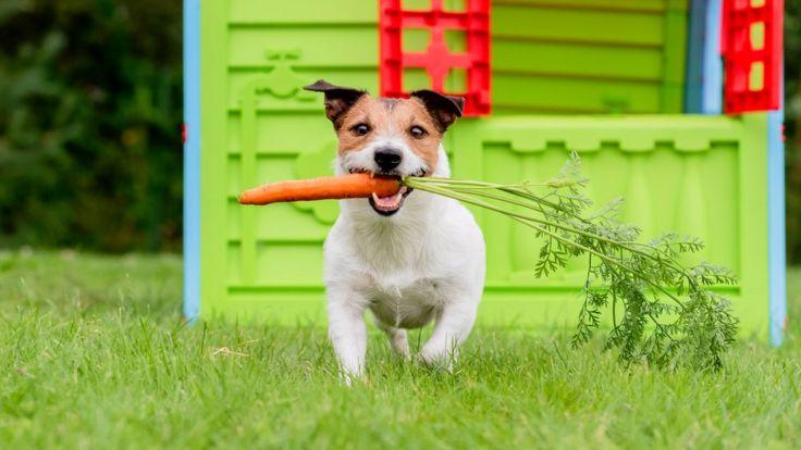 Собачка с морковкой