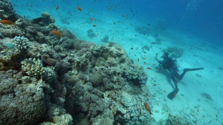 صخرههای مرجانی در دریای سرخ