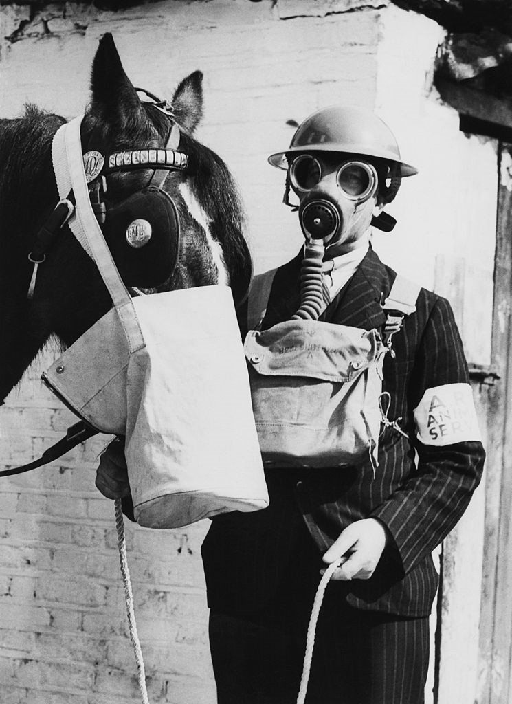 A horse with a gas mask