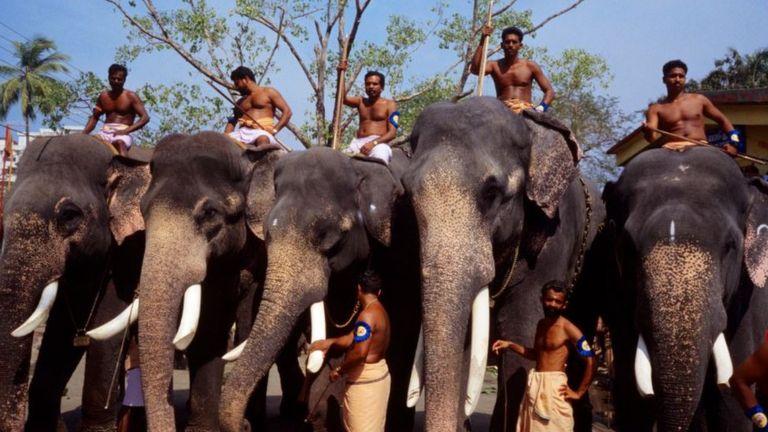 В храме Гурувайур живут более 50 слонов