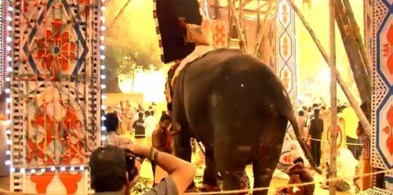 Слона заставляют стоять на месте, несмотря на фейерверки