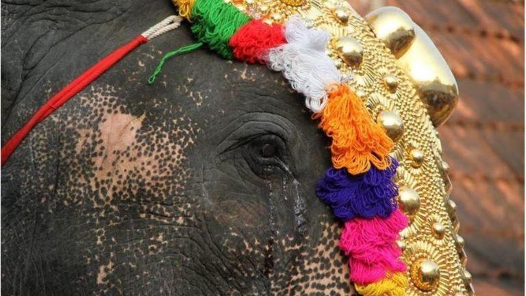 Плачущий слон