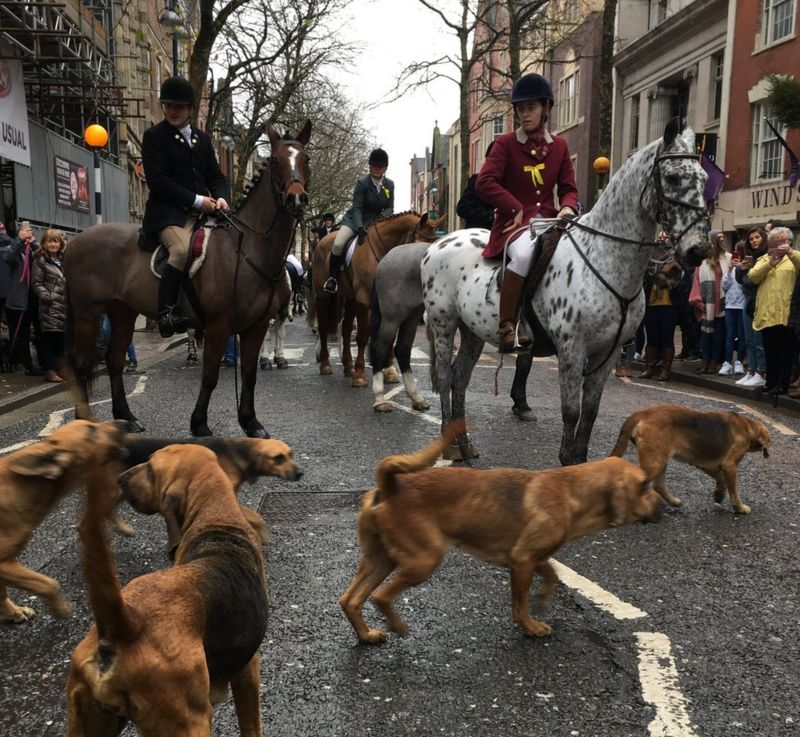 Horseriders and hounds