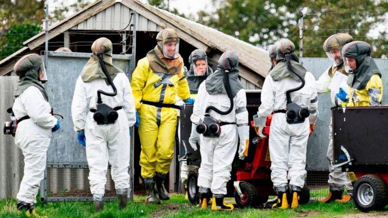 Coronavirus: Denmark imposes lockdowns amid mink covid fears _115239166_49e9f639-d915-4228-9885-0705a25fcd96