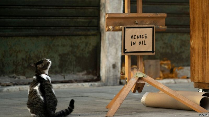 Cat looking at the title of Banksy's new artwork - 'Venice in Oil'.