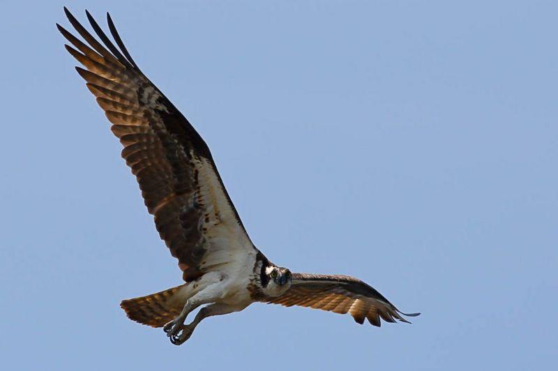 _115370438_img_3494-osprey.jpg