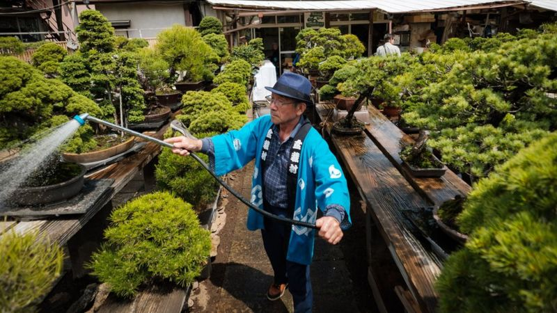 A staff member waters Bonsai in Saitama, Japan.