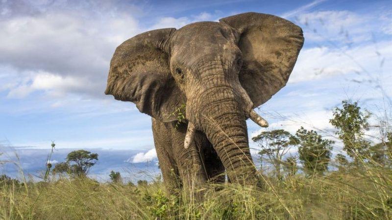Hwange National Park has more than 40,000 elephants