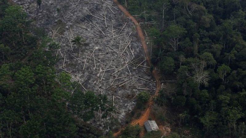 تخریب جنگلها آمازون به بالاترین حد خود از سال ۲۰۰۸ 'رسیده است'