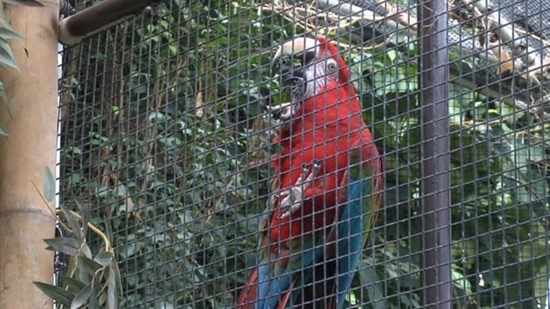 Parrot at Plantasia