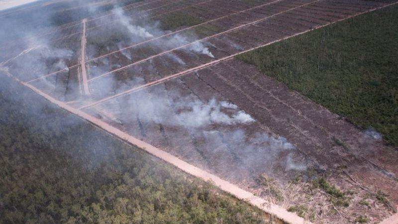 Lisensi perusahaan sawit Korsel dicabut lembaga sertifikasi, FSC menyusul investigasi yang ungkap Korindo 'sengaja' membakar lahan di Papua