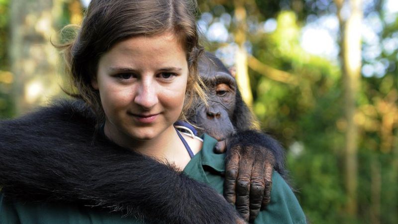 Conservationist and chimpanzee