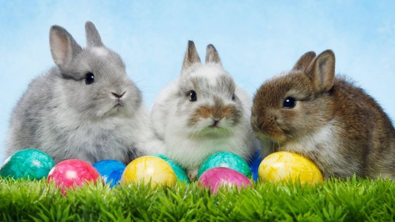 Rabbits sitting behind some Easter eggs