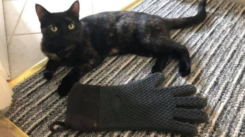 Cat Steals Gloves For Fun