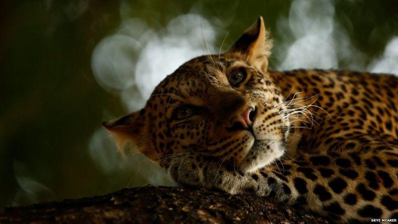 _103899505_skyemeaker-wildlifephotographeroftheyear.jpg