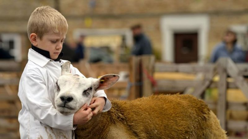 boy-with-sheep
