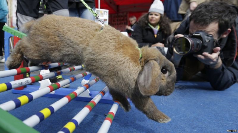 pictures easter bunny obstacle race cbbc newsround