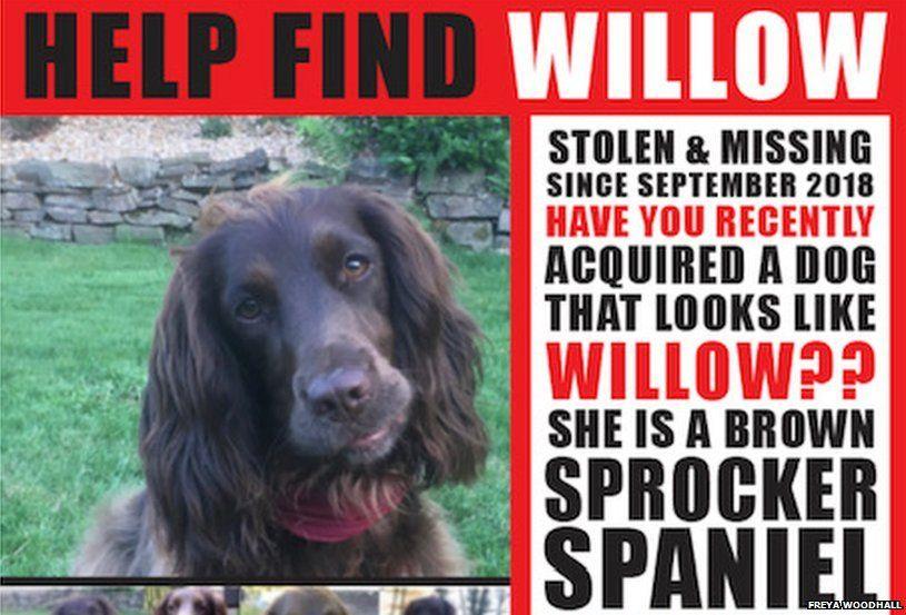 Freya Woodhall Willow missing poster
