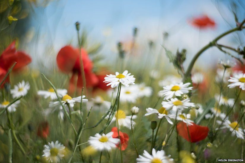 Meadow and flowers
