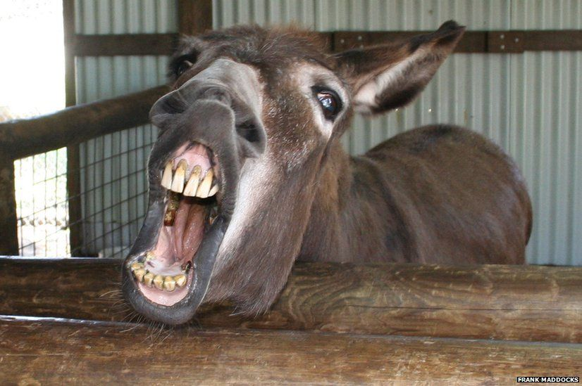 Donkey