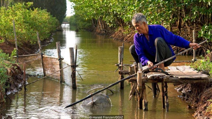 Rễ cây ngập mặn có chức năng lọc nước biển và giúp phát triển đa dạng sinh học các loài cá, thủy sản