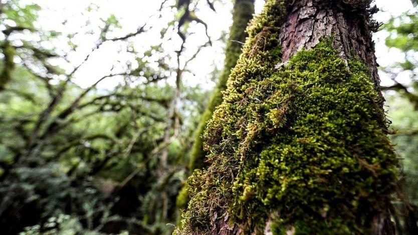 По словам экспертов, без вирусов наша планета утратила бы значительную часть биологического разнообразия