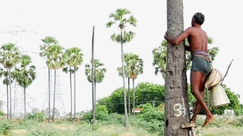 பள்ளிக்கூடம் நடத்த பனை மரம் ஏறும் கிராம மக்கள்