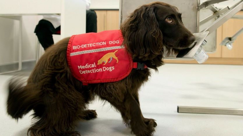 Dog in a hospital with jacket on reading 'bio-detection dog'