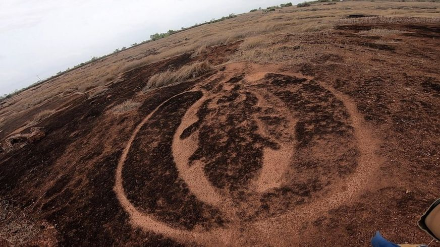 Petroglyph bug