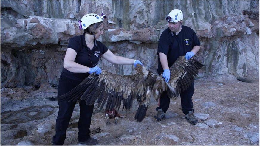 Неандертальцы могли ловить грифов, чтобы использовать их перья как украшения (Credit: BBC Earth)