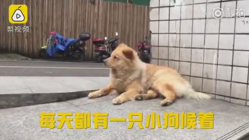 Xiongxiong the loyal dog