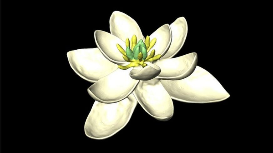 https://ichef.bbci.co.uk/news/872/cpsprodpb/6C42/production/_97141772_flower_model_obligue7_5000x4000.jpg