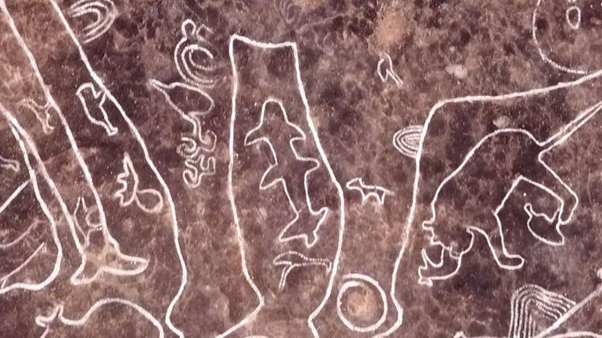 Petroglyph sharks