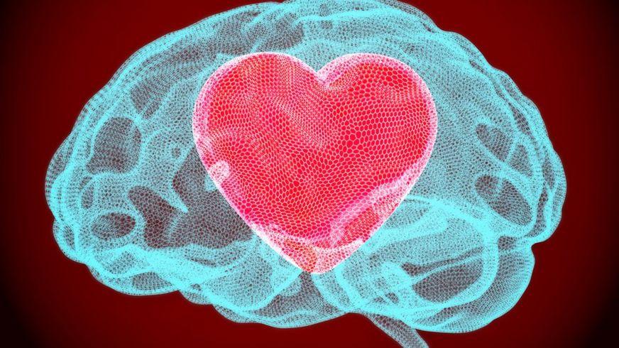 Imagen de un cerebro con un corazón dentro