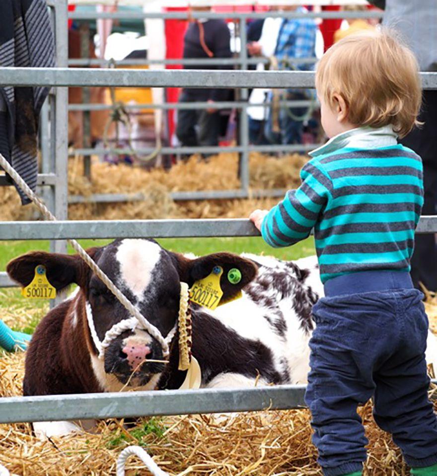 Arthur and a calf