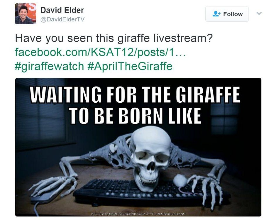 """A tweet saying """"waiting for the giraffe to be born like"""" and a picture of a skeleton"""