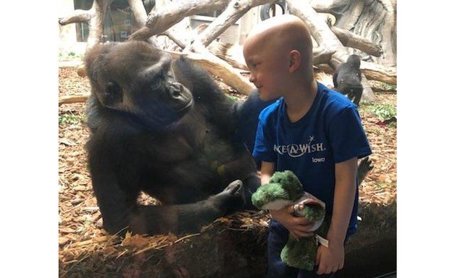 Garret Matthias looking at a Gorilla at the zoo