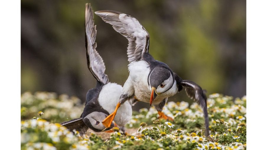 In pictures: A celebration of British wildlife