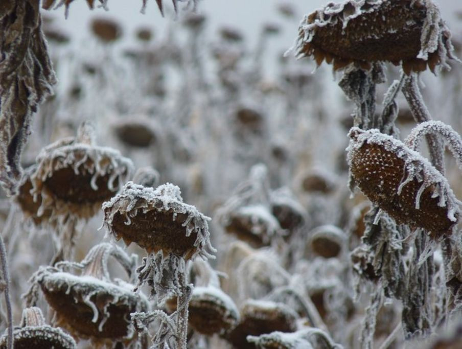Your pictures: Cold weather