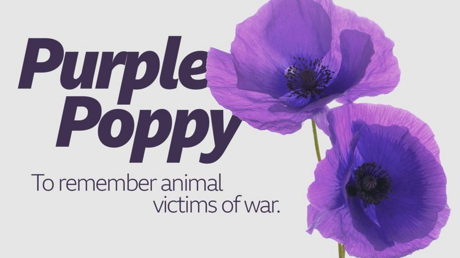 Image result for purple poppy