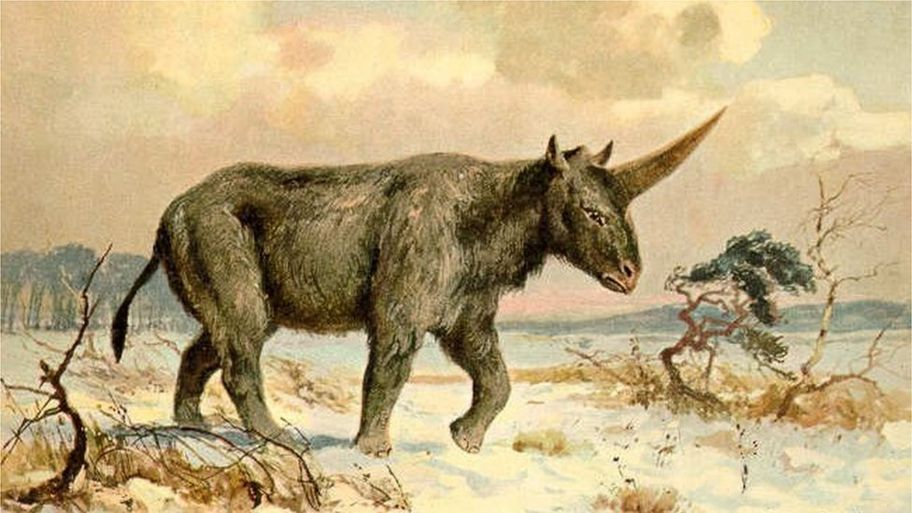 73d0be6aab0 This  Siberian unicorn  lived more recently than we thought - CBBC ...