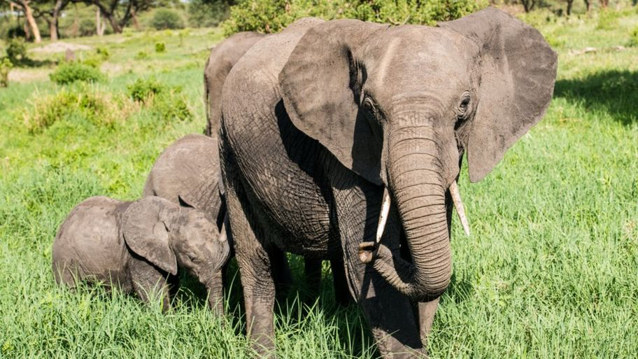 world elephant day should we be worried about the number of