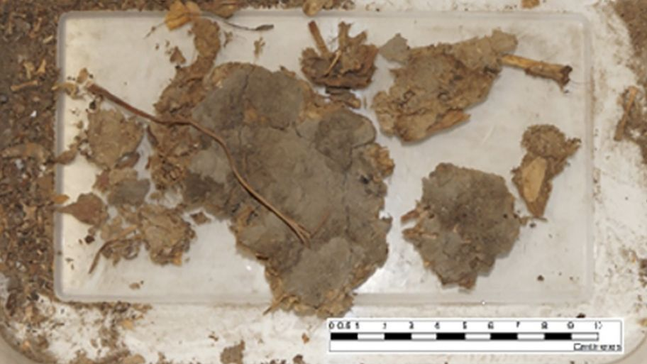 Entire snake found in a 1,500-year-old human POO! - CBBC Newsround