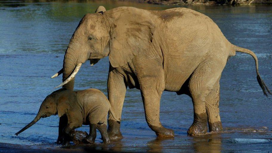 f4b3b9cd6 Why is ivory so popular in China  - CBBC Newsround