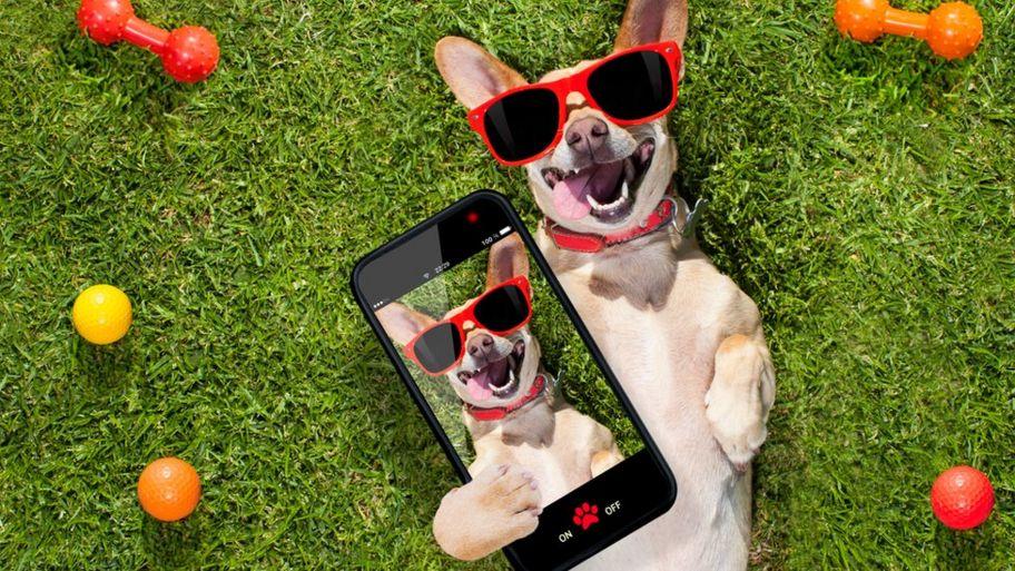 Resultado de imagen para iphone 11 pets