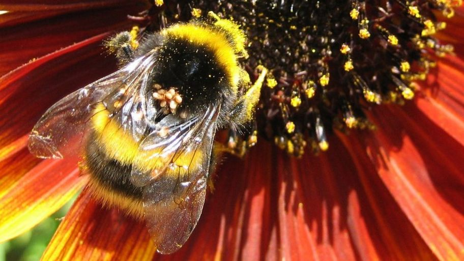 Bees: What's the buzz about World Bee Day? - CBBC Newsround