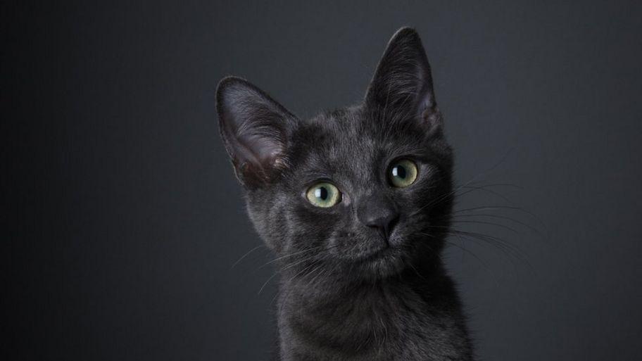 Black Cats Give Them Some Love Cbbc Newsround
