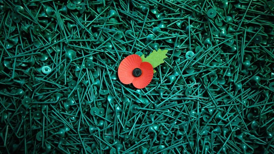 Why do people wear poppies cbbc newsround plastic poppy stems mightylinksfo