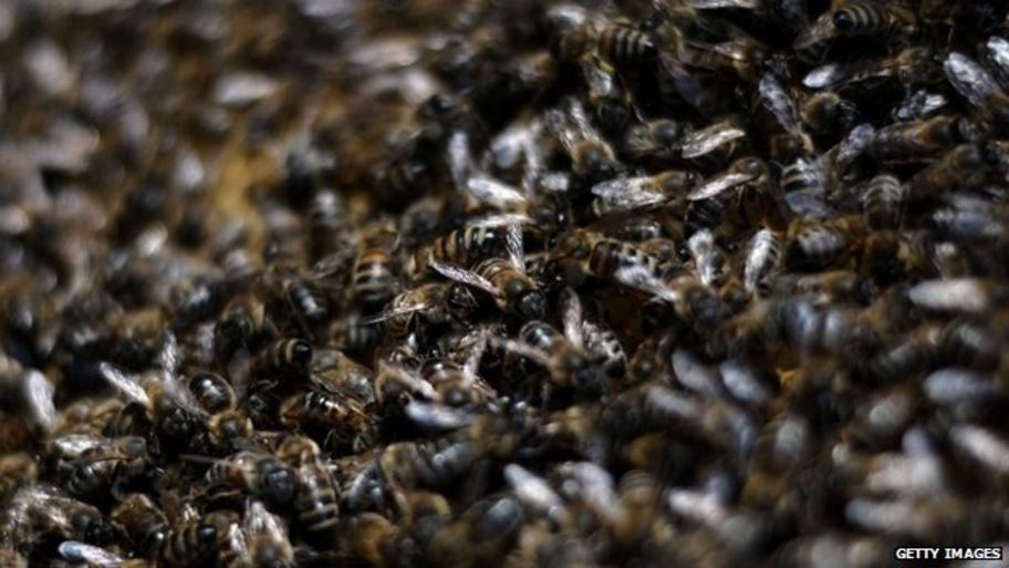 EU votes for two year ban on pesticides to protect bees